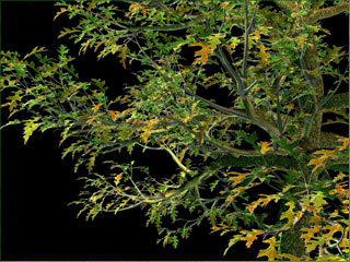 TREE STORM - plugin for 3ds Max - animates tree on the wind